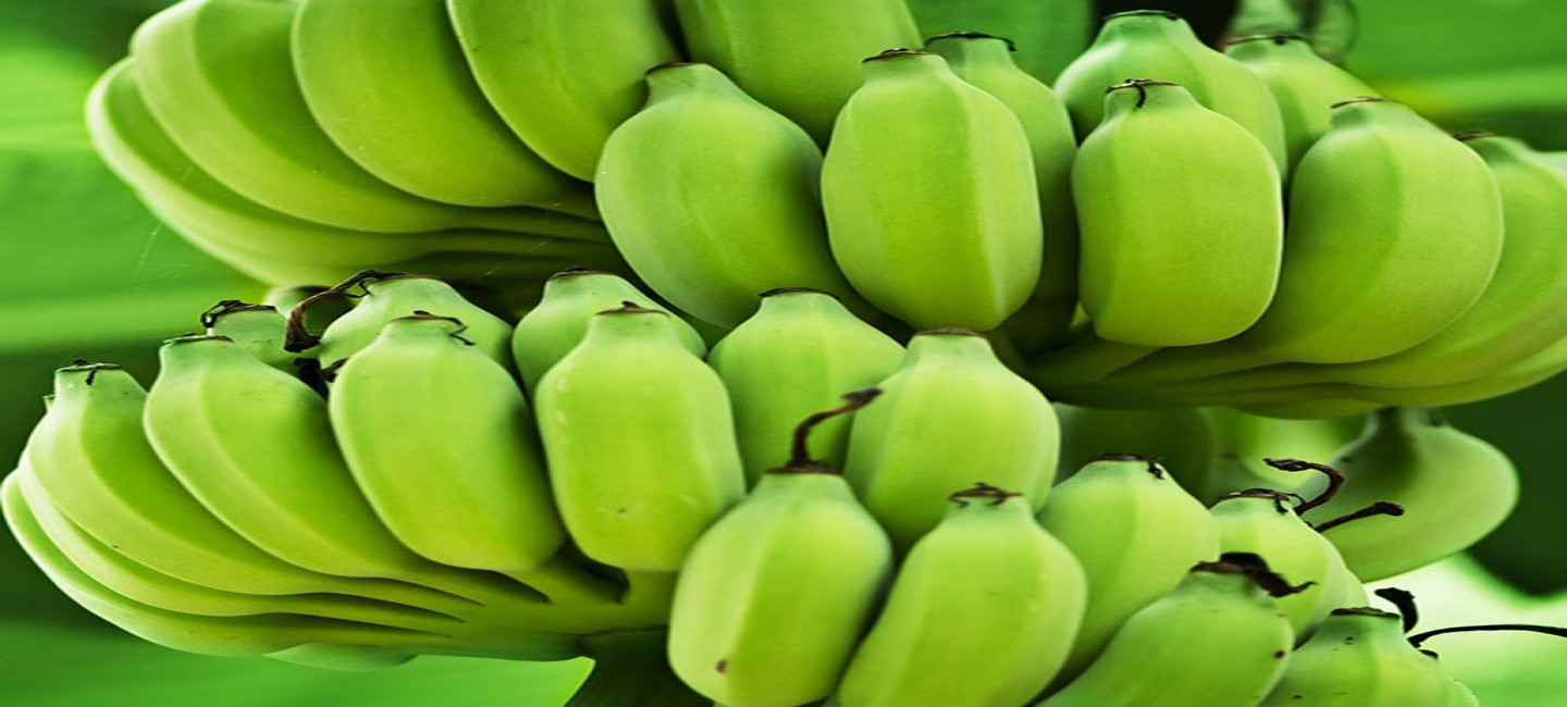 Tropical fruits are cultivated in Murgab Oases